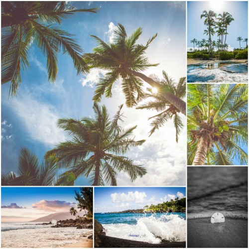 palmsandcollage
